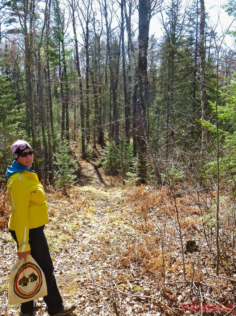 An early spring hike on Norberg Lake Trail at Bear Head Lake State Park