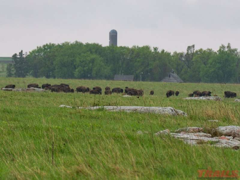 Buffalo in their enclosure at Blue Mounds State Park