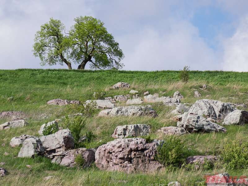 Quartzite outcroppings pierce the remnant tall grass prairie at Blue Mounds State Park