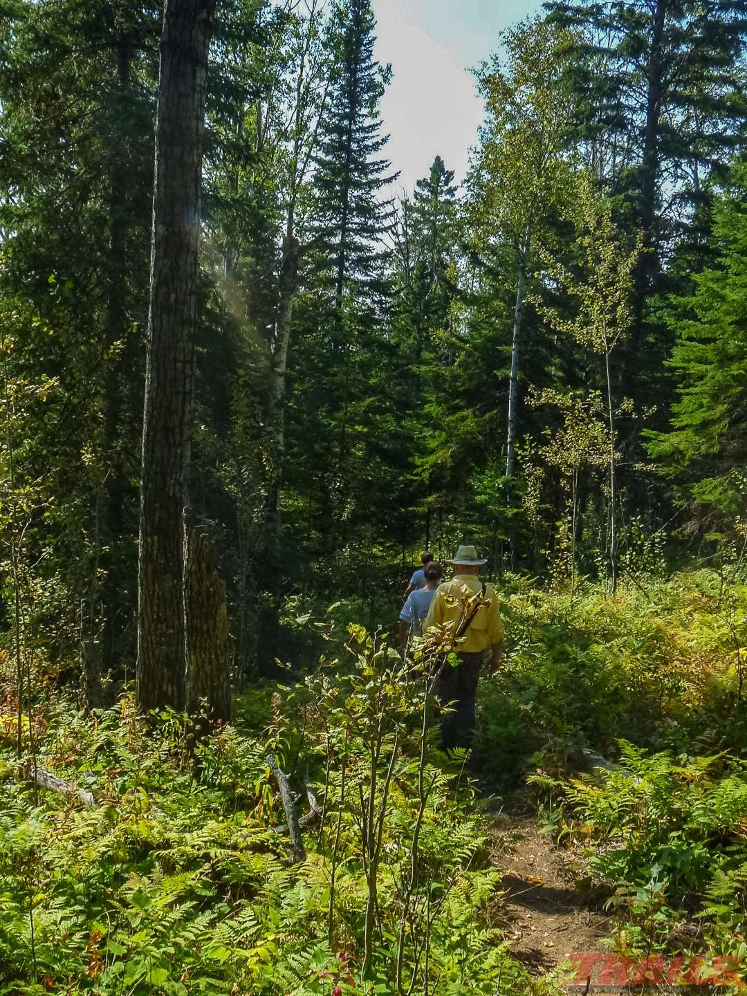 Rugged hiking trails throughout the park at Cascade River State Park