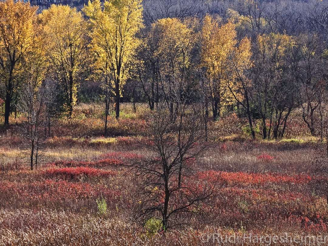The river valley lights up with fall colors at Flandrau State Park