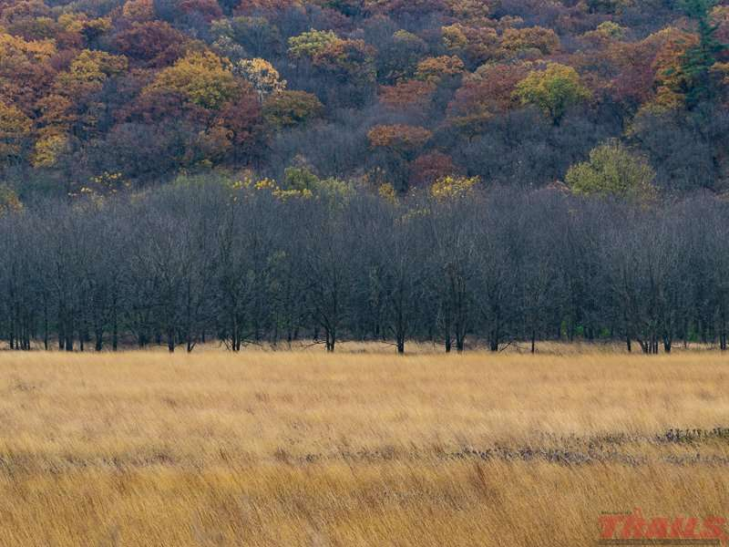 Autumn landscape at Forestville/Mystery Cave State Park
