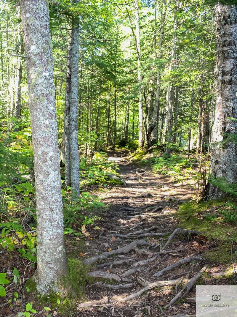 Middle Falls Trail at Grand Portage State Park