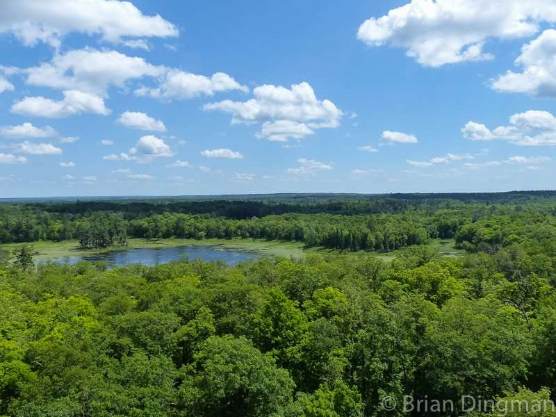 View from the fire tower at Itasca State Park