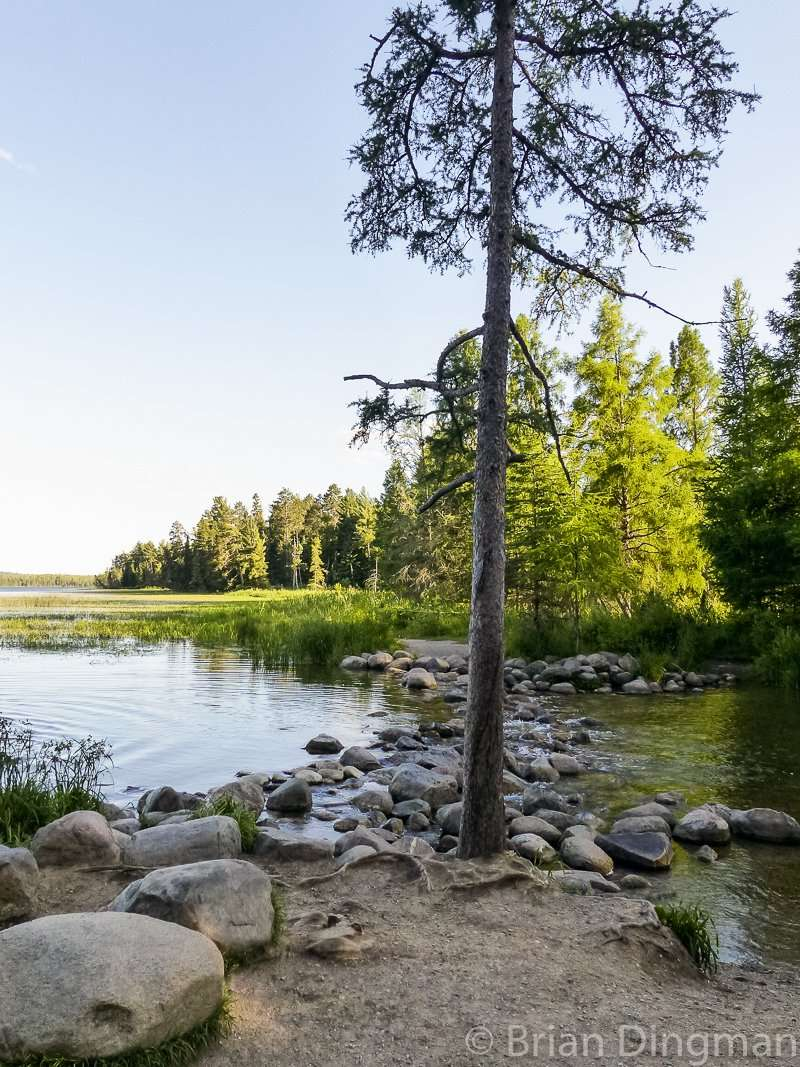 The headwaters of the Mississippi River at Itasca State Park