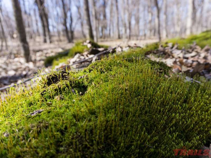 Moss on the forest floor at Lake Carlos State Park