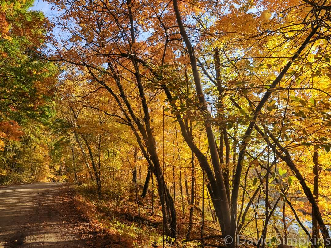 Fall splendor on the park's main drive at Maplewood State Park