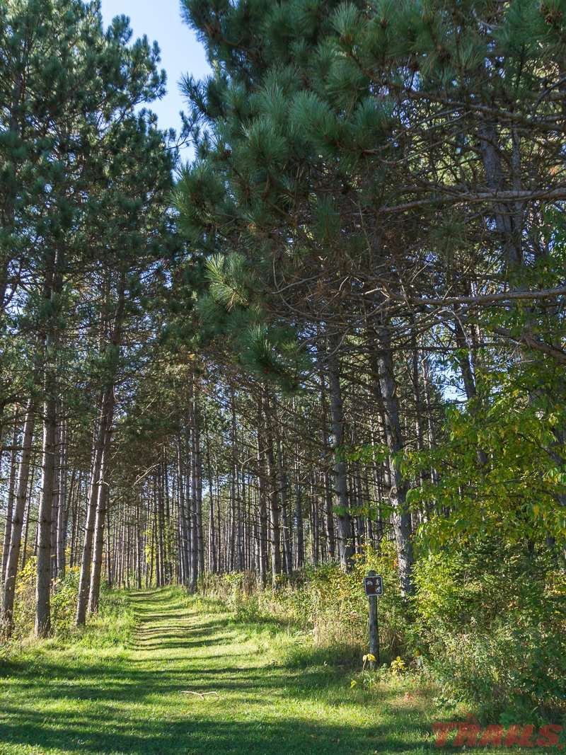 Not all trails here are lined with hardwoods at Mille Lacs Kathio State Park