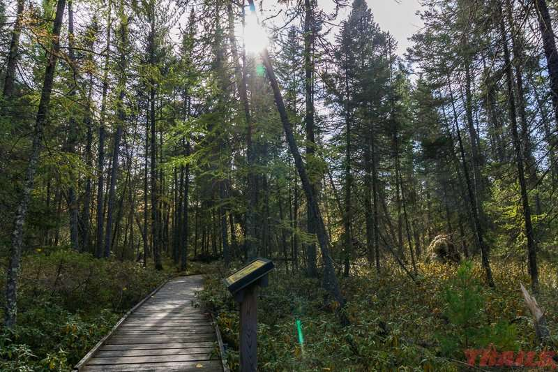 The bog walk gives you access to a unique ecosystem at Savanna Portage State Park