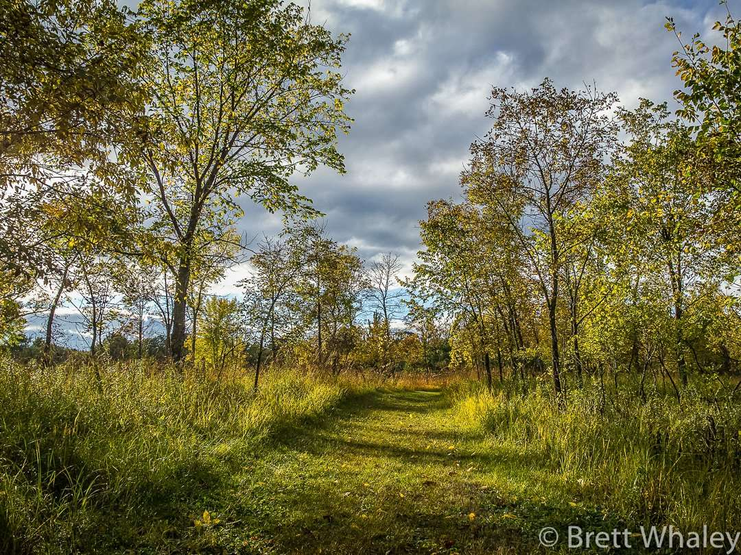 The Woods Trail at Crow Wing State Park