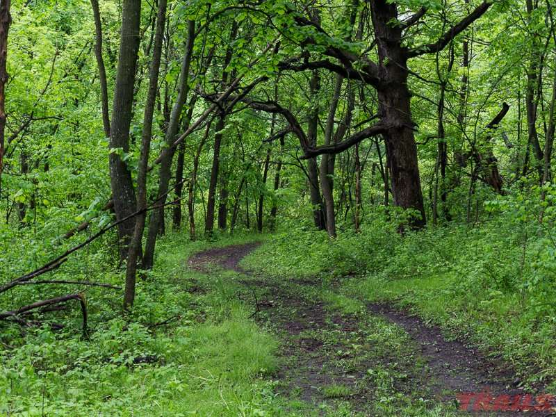 The trails along the river bottom are heavily wooded at Upper Sioux Agency State Park