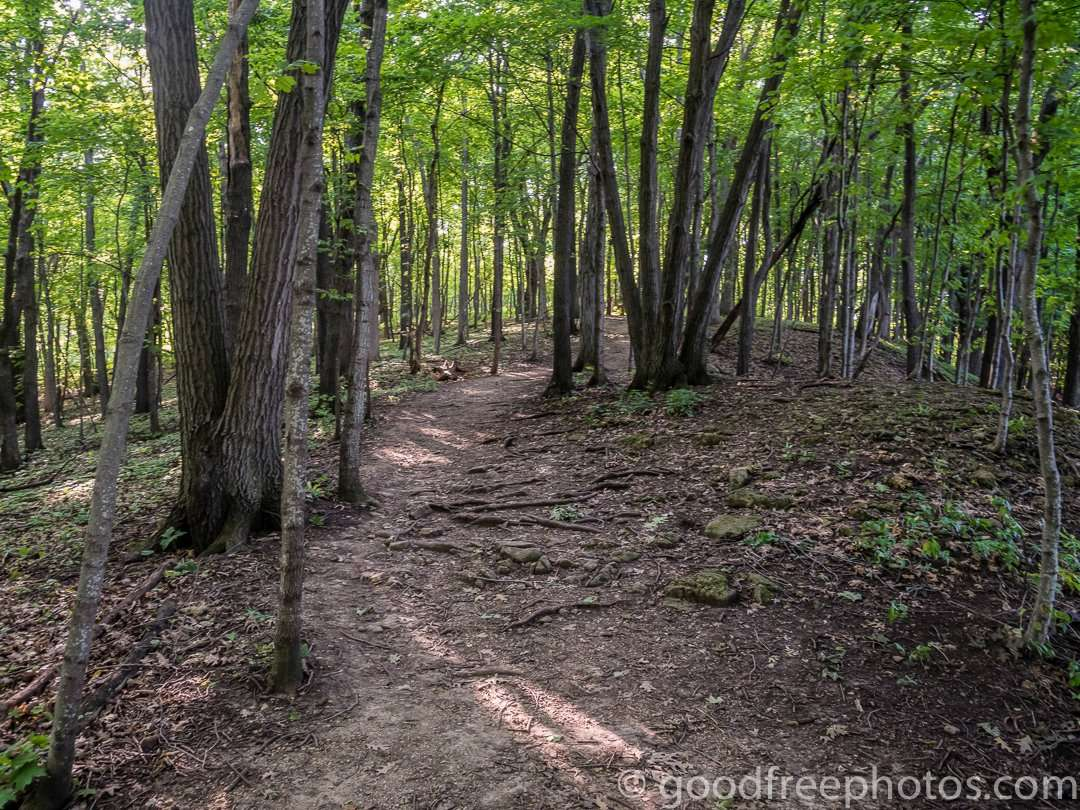 Hiking trail through the hardwood forest at Great River Bluffs State Park