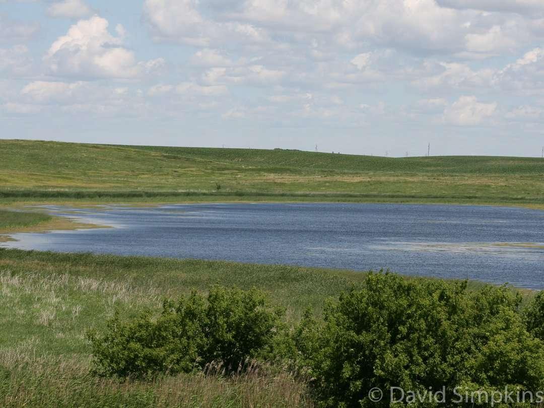 Eastlick Marsh is home to many species of waterfowl at Lake Shetek State Park