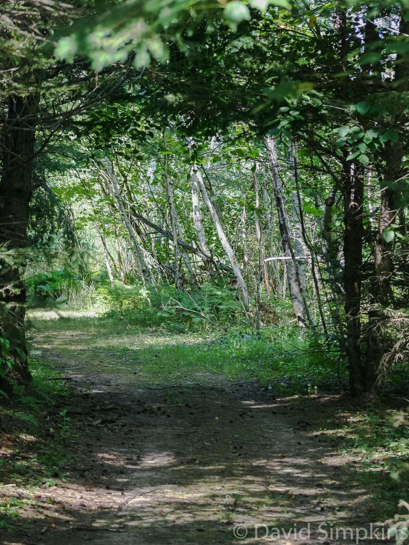 Walking trail at Moose Lake State Park