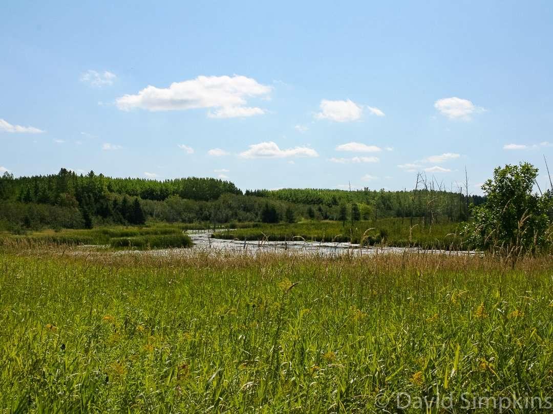 Echo Lake offers prime panfish habitat at Moose Lake State Park