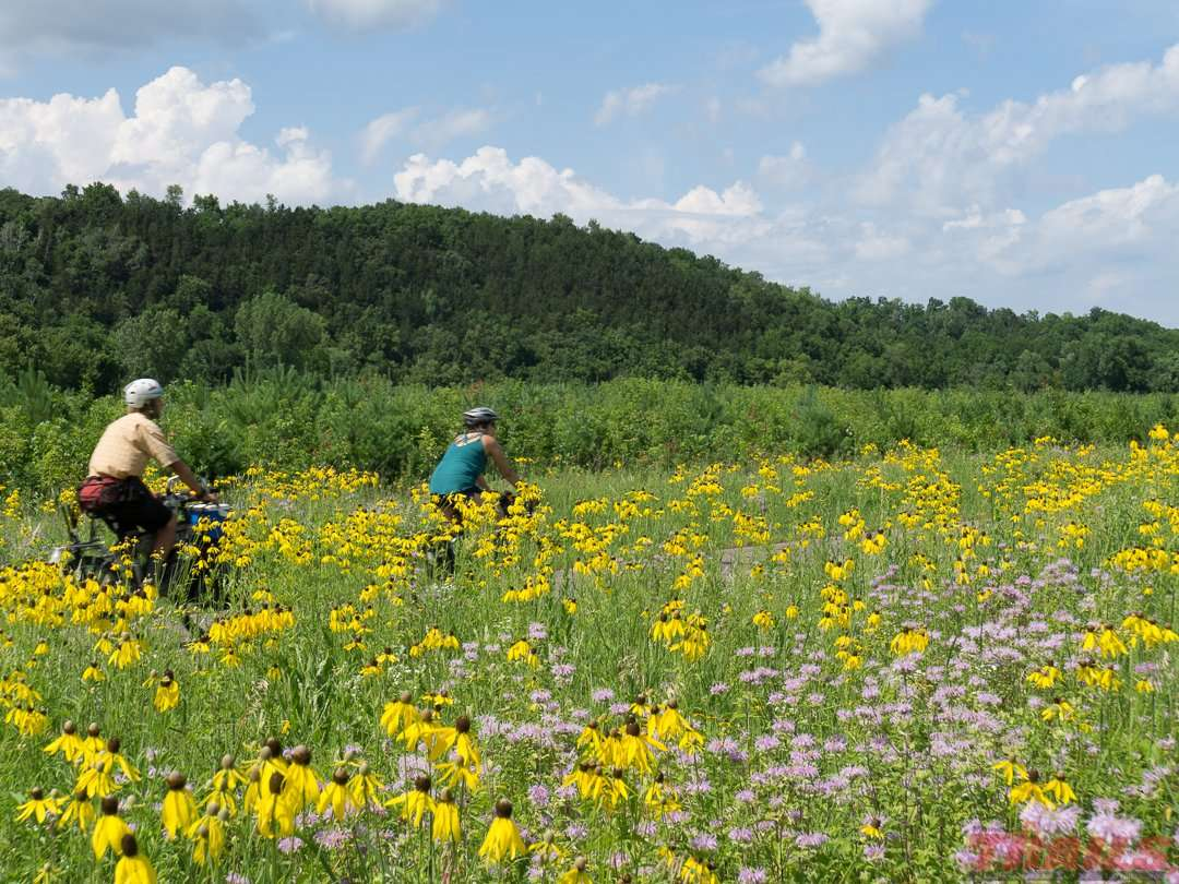 Wildflowers bloom on the Cannon Valley Trail. Look closely and you may even spot rare species