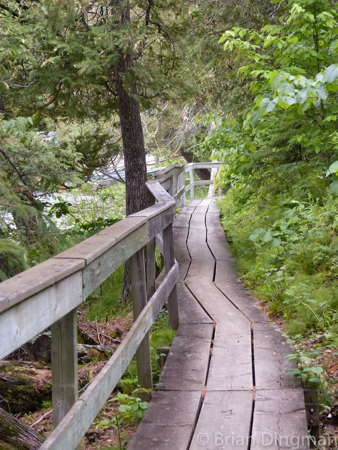 The boardwalk below Chase Point Campground follows the edge of Coon Lake at Scenic State Park