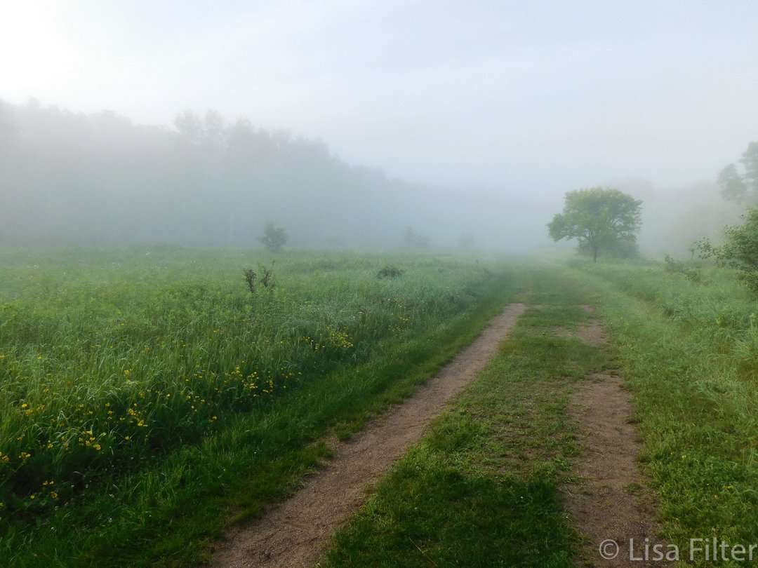 A misty morning at William O'Brien State Park