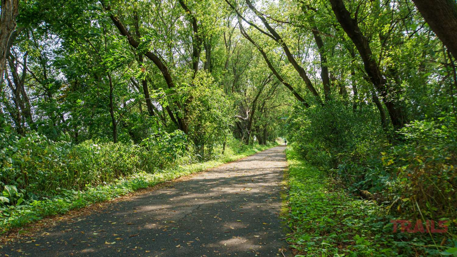 A paved trail flanked by trees