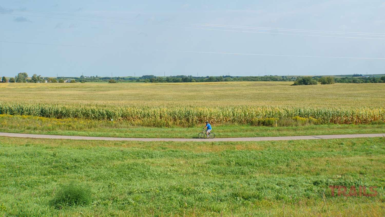 A man rides a bike past a corn field