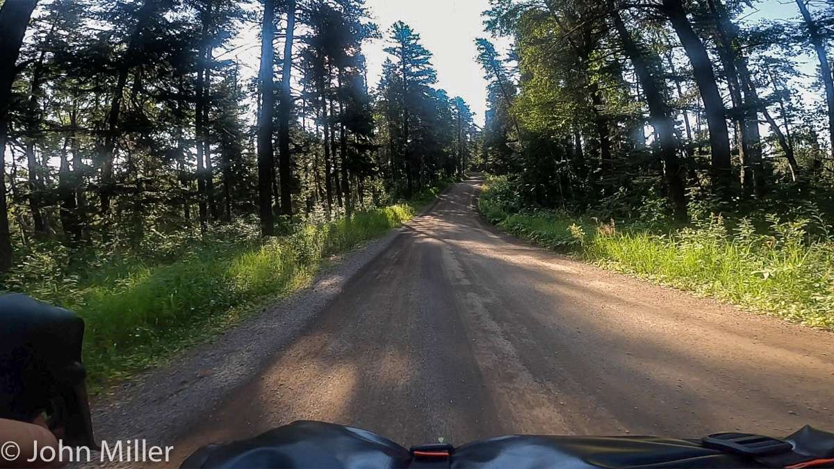 View of a forest gravel road