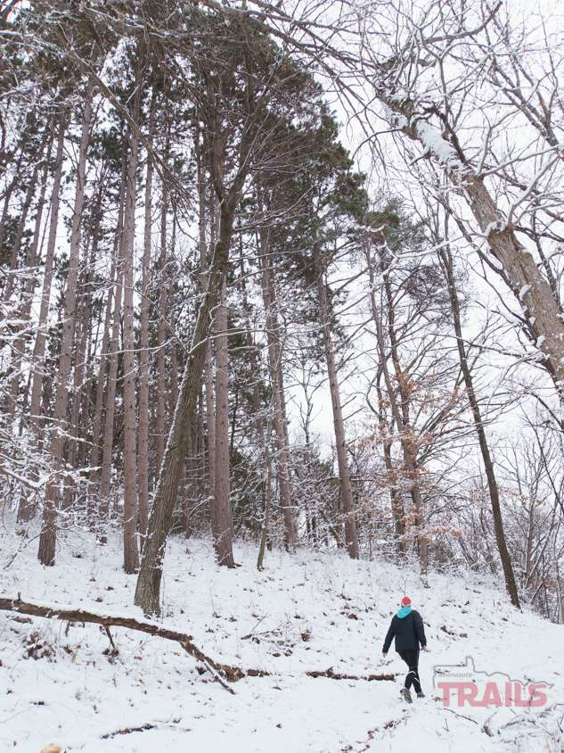 Walking among all trees at Afton State Park in the winter