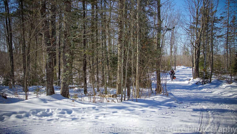 Fat biking through a wintery forest