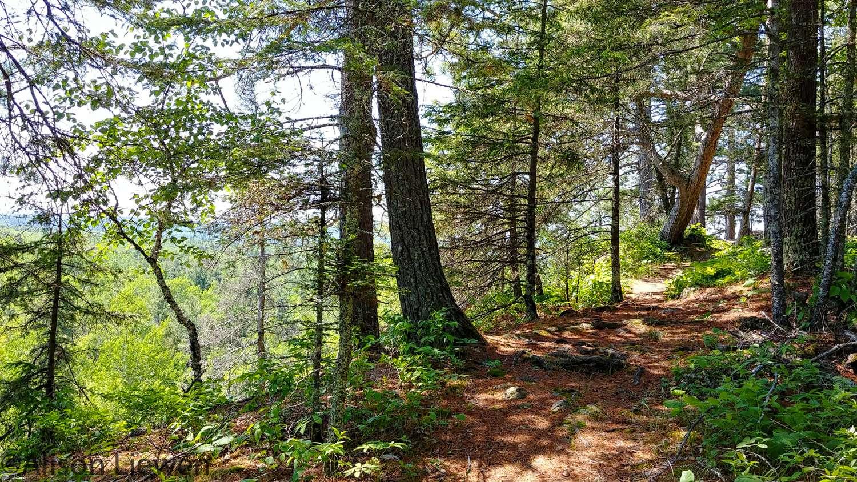 Ridge Trail near Encampment River