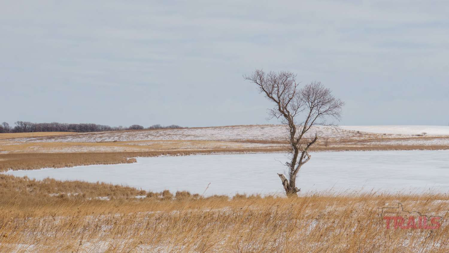 Winter view of a frozen lake surrounded by prairie grasses with a tree in the foreground