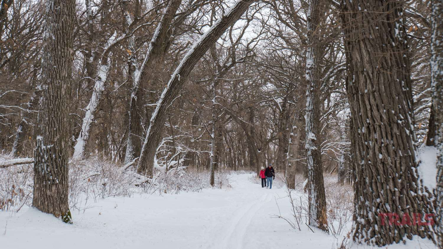 A man and woman walk through a snowy forest