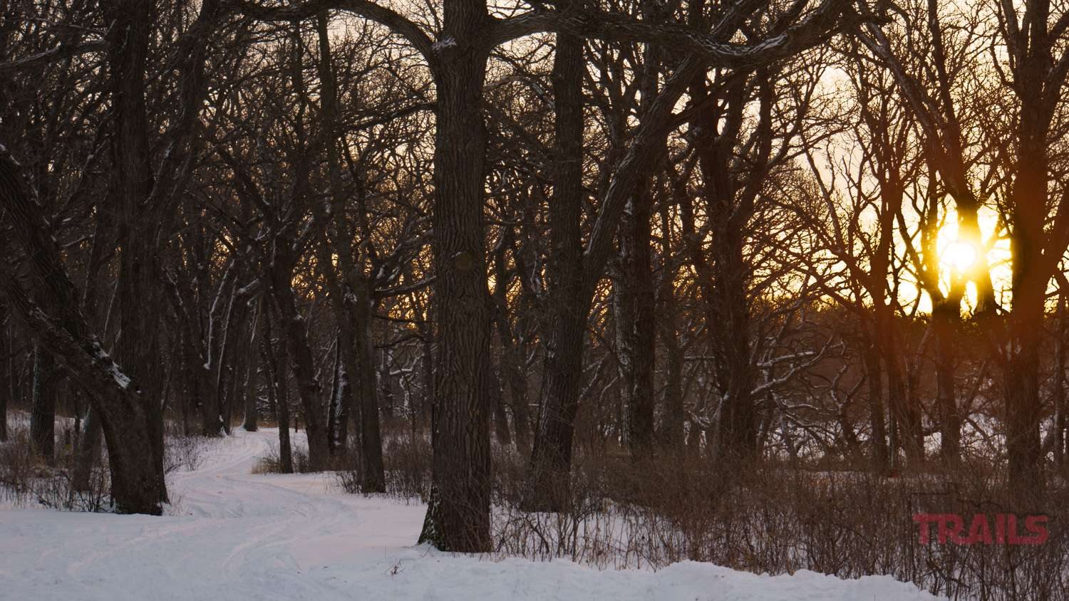 Sunset in a wintery forest
