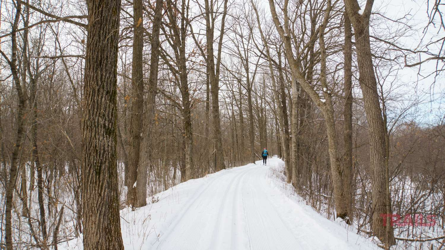 A woman skis along a ridge trail in a forest