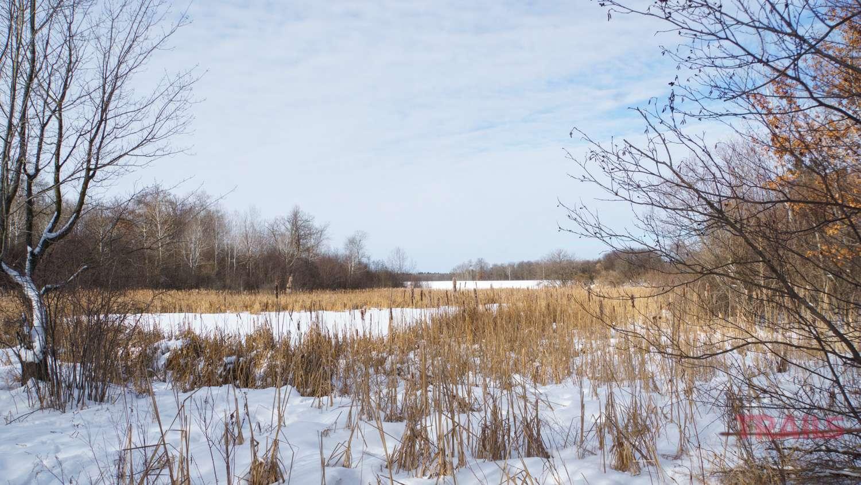 View of a frozen marsh