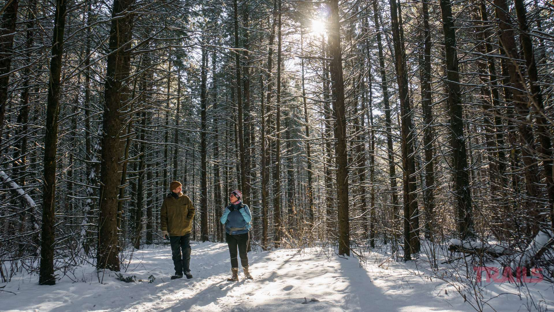 A man and a woman walk through a forest in the winter