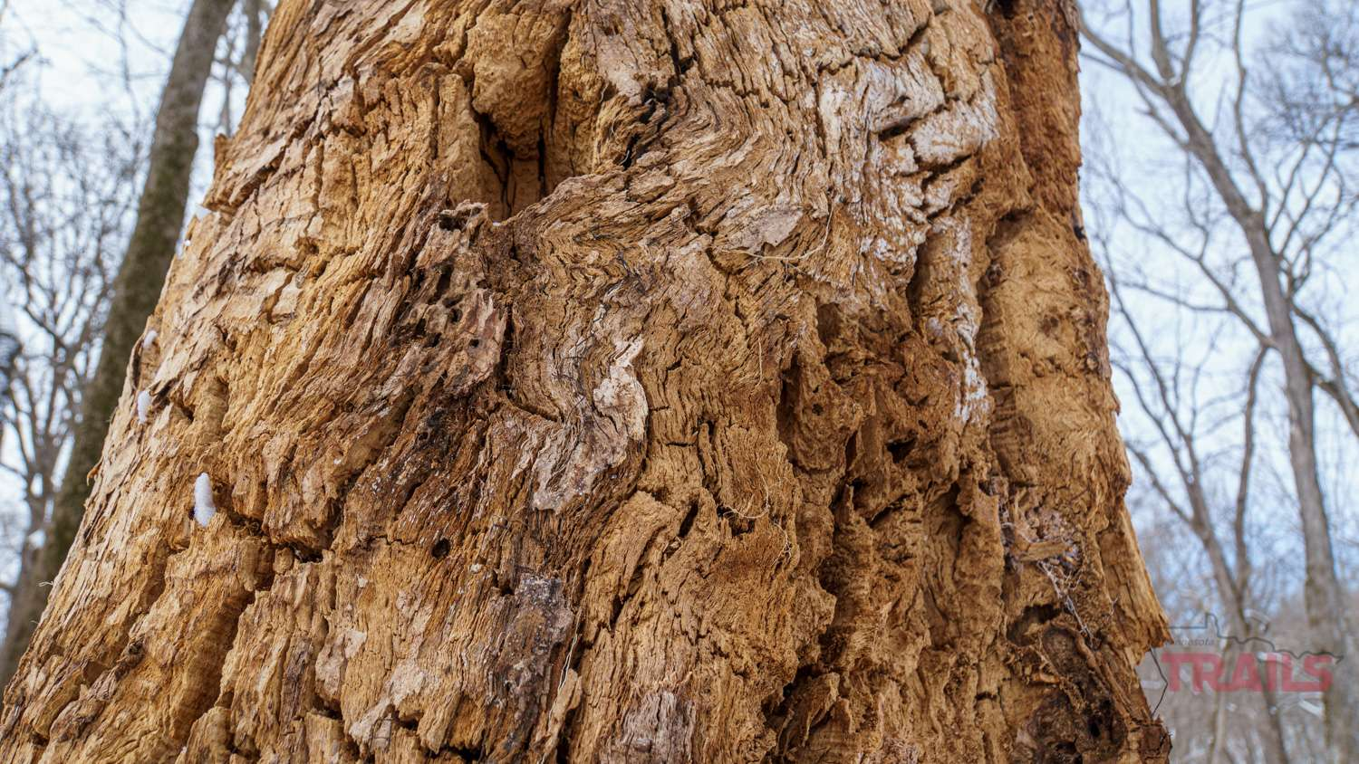 Closeup of a decaying tree trunk