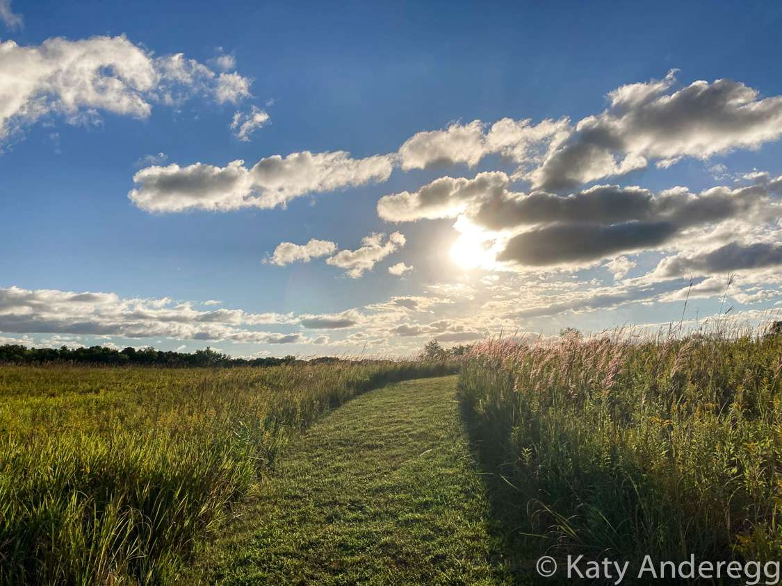 Sunshine and blue skies over prairie grasses