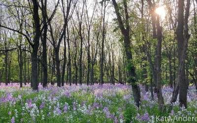 Guest Blog: River Bend Nature Center
