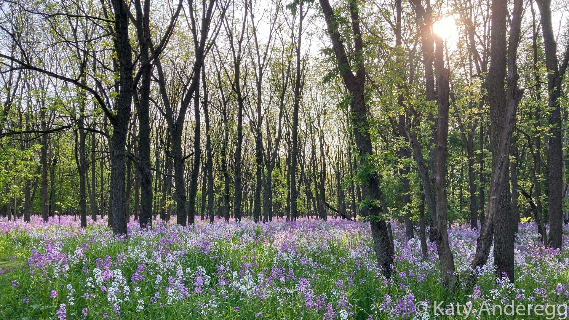 Wildflowers carpet the forest floor in the spring