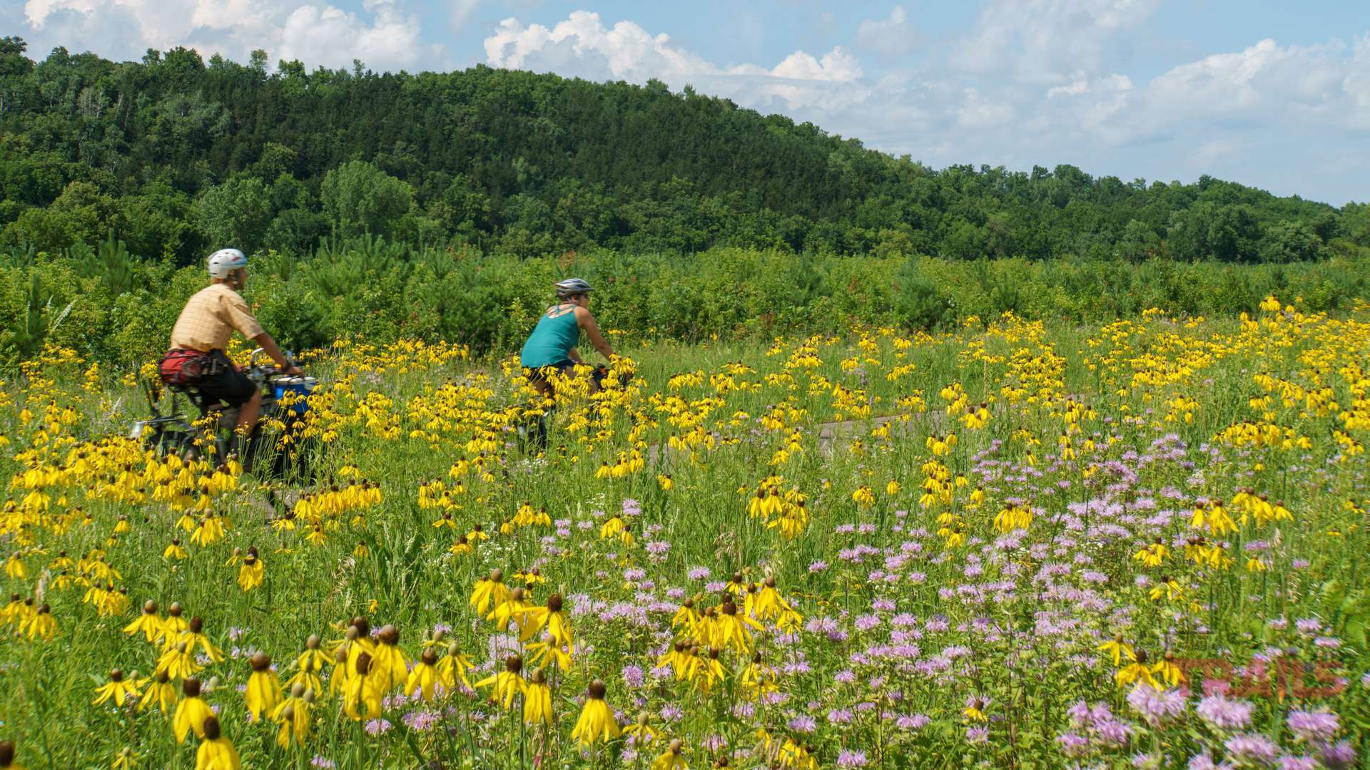 Two bicyclists ride through a field of flowers on a bike trail