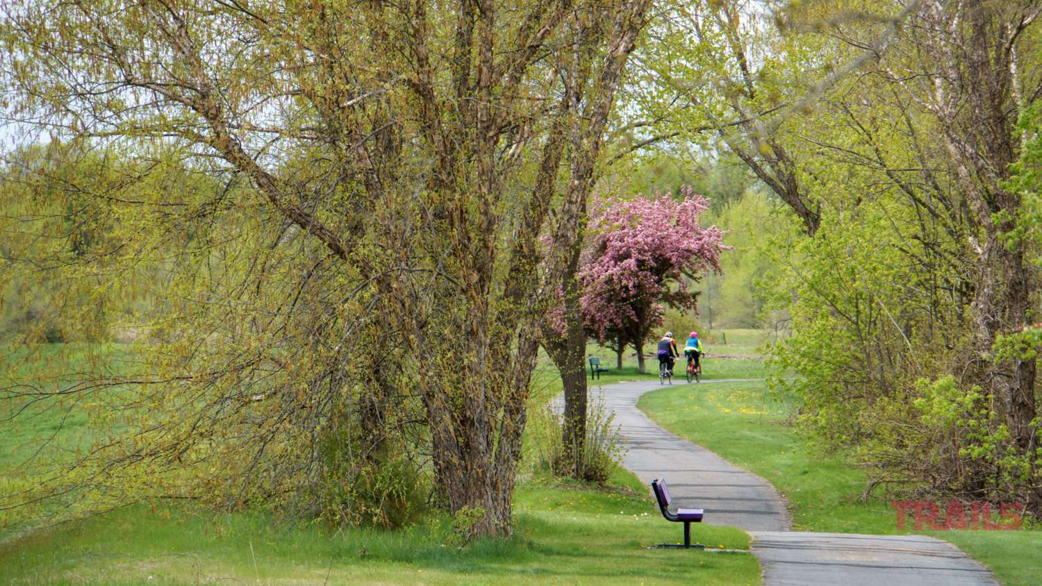 Three people on bikes ride through a park with flowering trees in the spring
