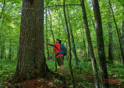 A woman pauses on a hike to take a closer look at a large tree