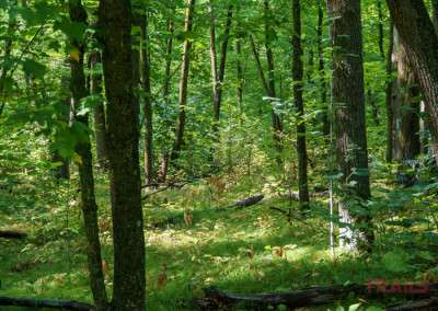 A stand of trees shades the forest floor on a hiking path