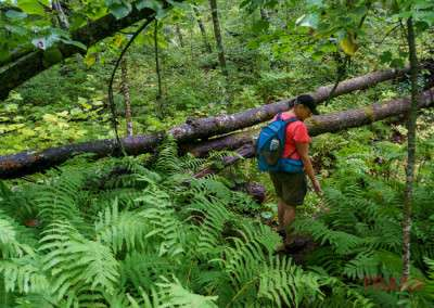 A woman pauses on a hike to take a closer look at ferns growing along the trail
