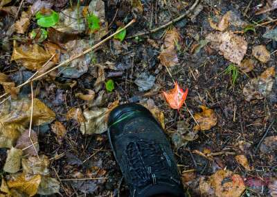 A closeup of a colorful leaf on the forest floor next to a hiker's shoe