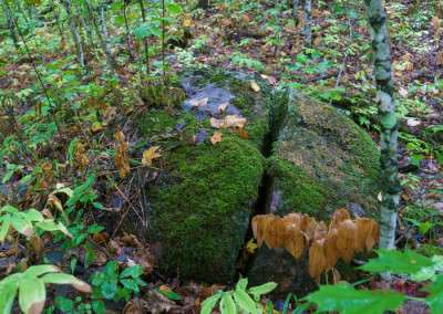 A closeup of the forest floor shows details of moss growing on a cracked boulder