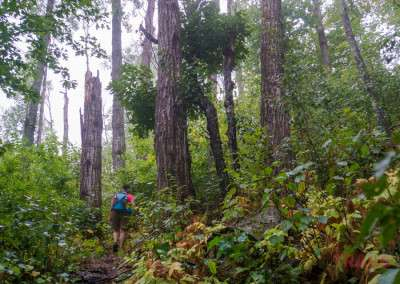 A woman walks through a thick forest on a path in the rain