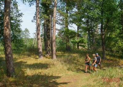 A group of casual hikers walks through a small stand of trees on a path